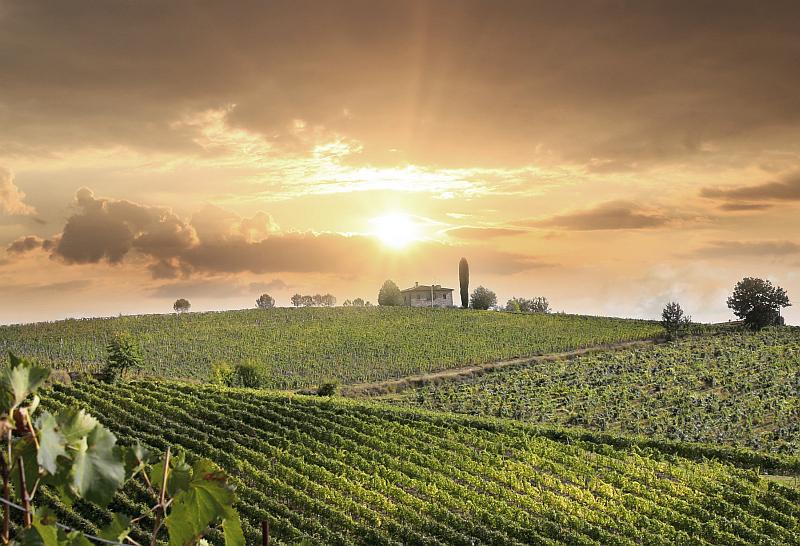 Trendy dovolená 2014 - francouzské vinice Foto: Exclusive Tours, oficiální zdroj