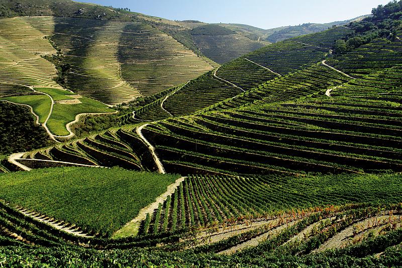 Vinařská oblast podél řeky Douro Foto: Global Wines, oficiální zdroj