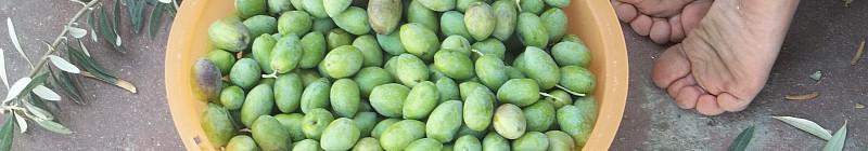 Wendy Ewald: Green Olives … Abed /Zelené olivy … Abed, 2013 Foto: ©Wendy Ewald, DOX, oficiální zdroj