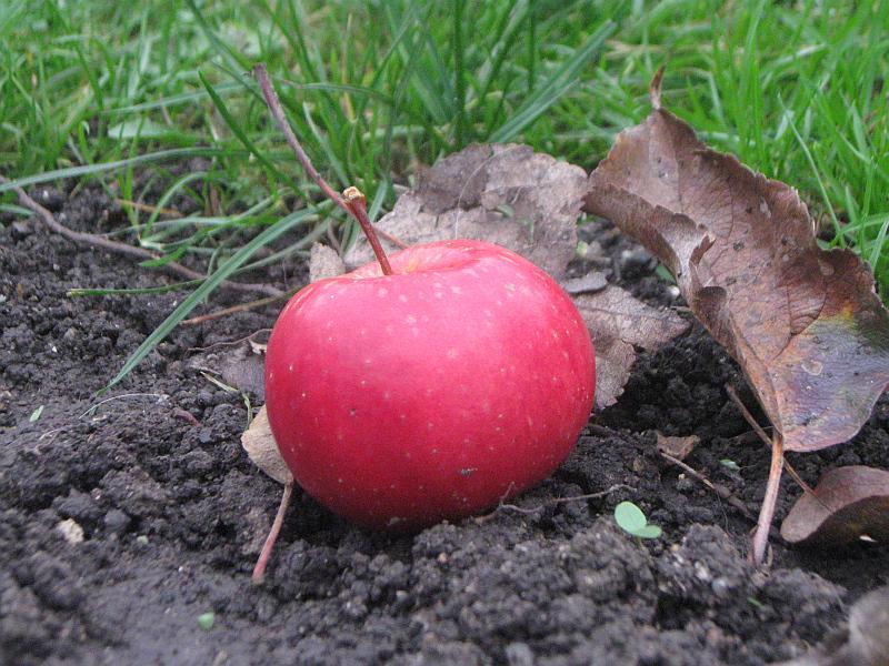 Zazimování zahrady Foto: Barbora Šabartová, e-Newspeak