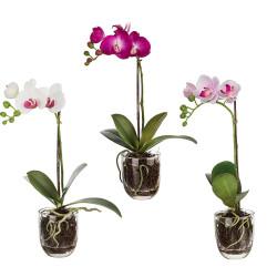 Cskarlin.cz_Sia-orchidej ve skle, vyska 41 cm, 3ks, cena 1.084 Kc