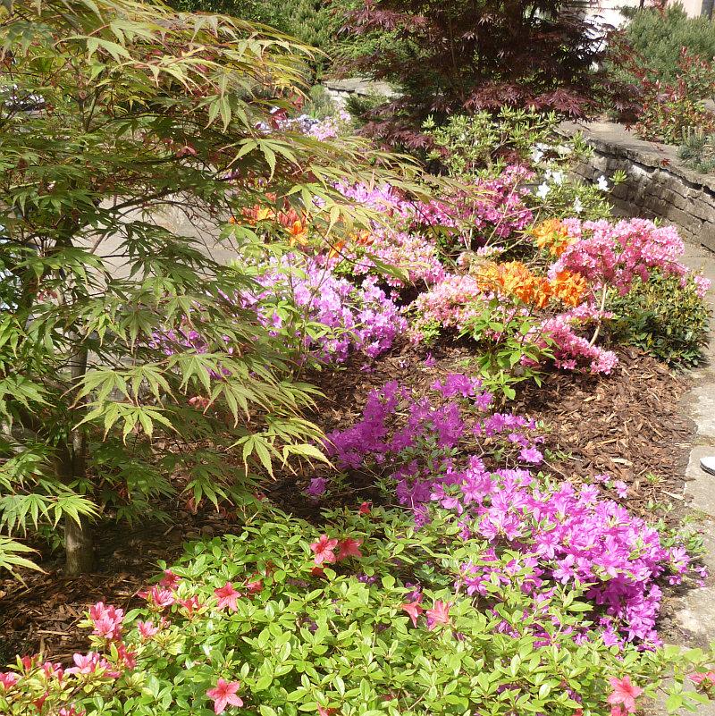 Azalky a rododendrony na 46. Velké květnové výstavě skalniček Foto: e-Newspeak