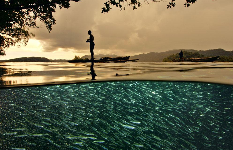 Vodní hladina jako fotografický objekt Foto: David Doubilet/Nikon, oficiální zdroj