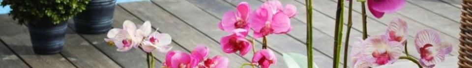 SIA: Orchideje Foto: SIA/Concept Store Karlín, oficiální zdroj