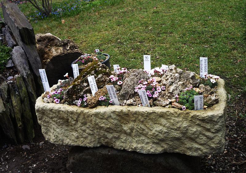 Májová výstava skalniček U Fausta: Korýtko osázené skalničkami Foto: ©Zuzana Ottová