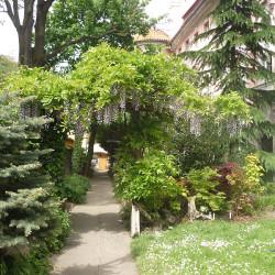 Skalničky - Vistárie stráží vstup