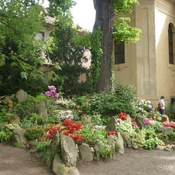 Skalničky - skalka s rododendrony2