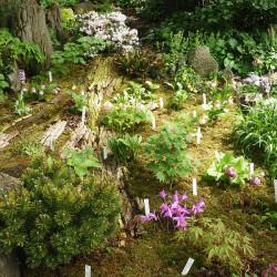 Skalničky - terestrické orchideje