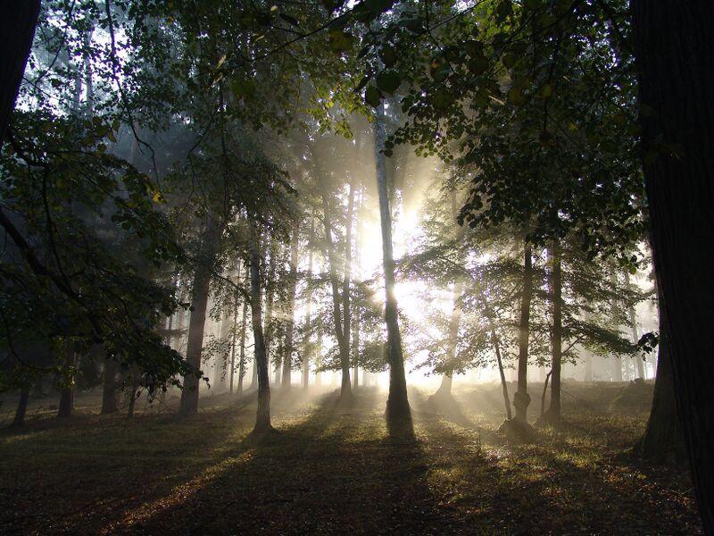 Na sběr svatojánských bylinek se vydáte do tajemného Svatojiřského lesa Foto: Chateau Mcely, oficiální zdroj