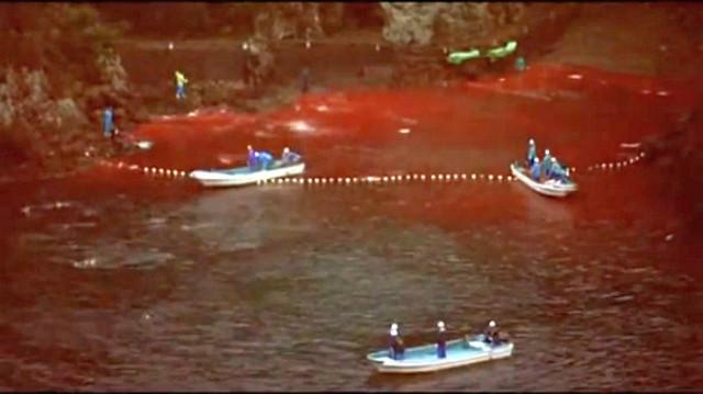 Scéna z dokumentu The Cove - voda v zátoce rudne krví zabíjených delfínů Zdroj: vlastní, v souladu s pravidly fair use