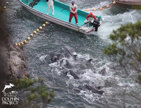 Vybíjení delfínů v zátoce Taiji Foto: Dolphin Project, oficiální zdroj