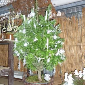 Vánoční výstava - Jarmila Tlustá - Papírové hvězdy