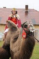 Zavírání Vánoc - král na velbloudu Foto: Chvalský zámek, oficiální zdroj
