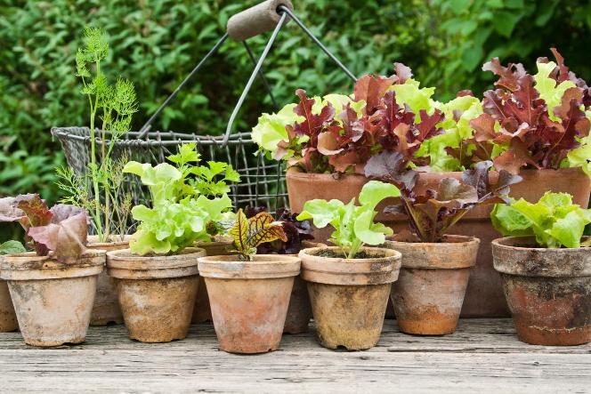 Růstové médium Vermikulit Zahrada pro předpěstování rostlin  Foto: Grena, oficiální zdroj