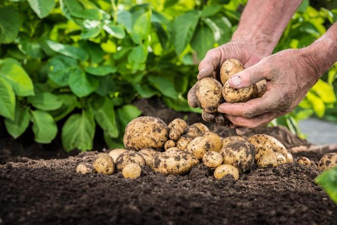 Vermikulit Zahrada ochrání i skladovanou úrodu Foto: Grena, oficiální zdroj