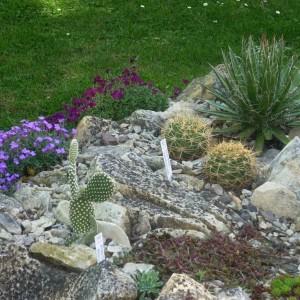 Mrazuvzdorné kaktusy a sukulenty