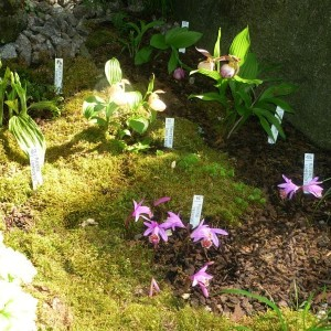 Venkovní orchideje