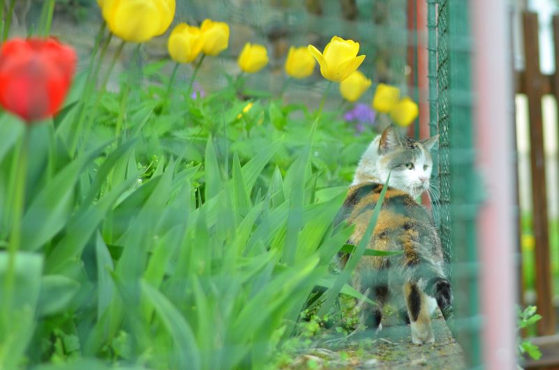 Jaro: Kočka Foto: Michal Večeřa