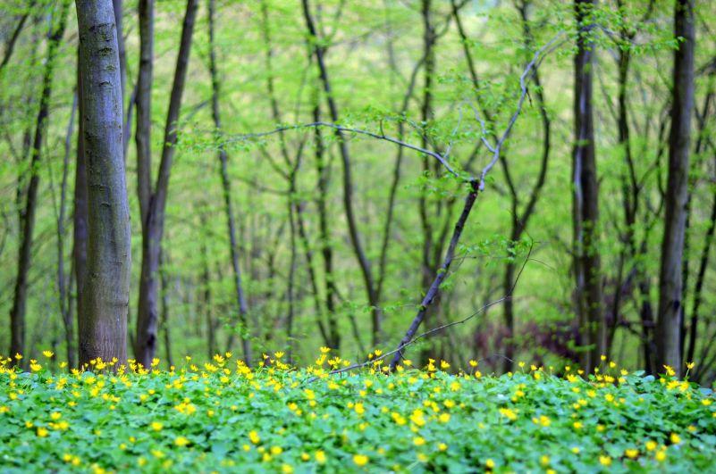 Jaro: Stromy Foto: Michal Večeřa