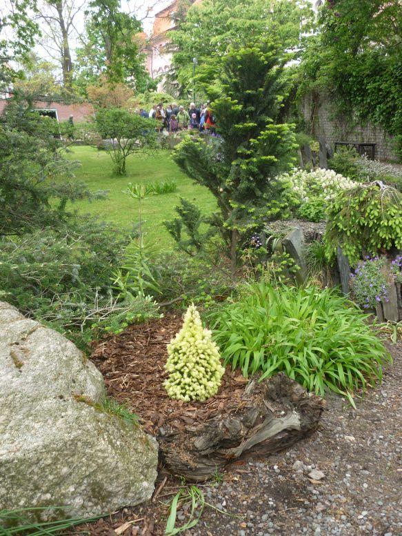Májová výstava skalniček - Smrk sivý Foto: e-Newspeak