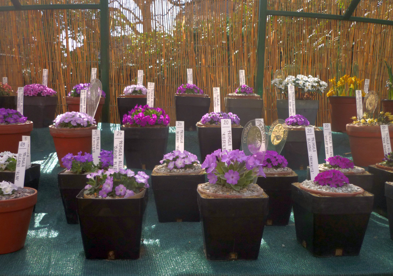 Jarní výstava skalniček Foto: e_Newspeak