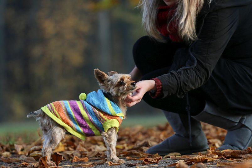 Příprava psů na zimu Foto: Fitmin, oficiální zdroj